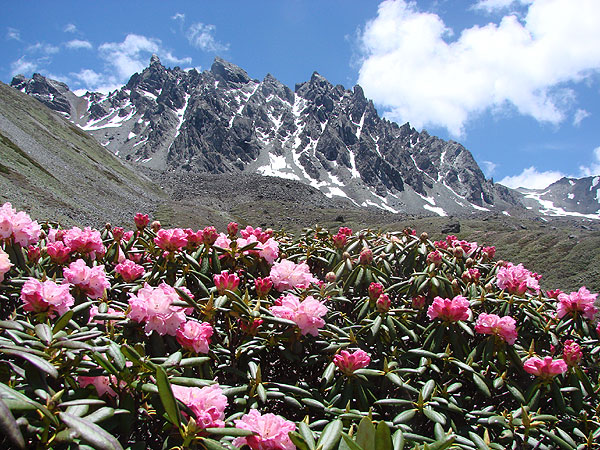 Himalayan Flowers and the Natural Biodiversity that We must Protect